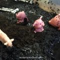 PigsMudSensoryBin2