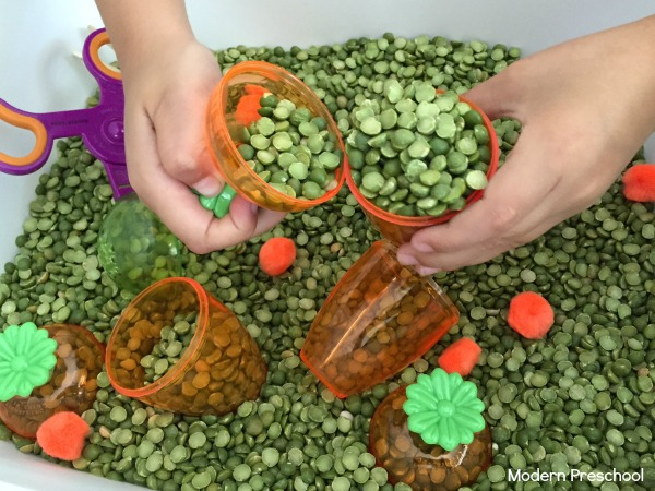Plant a carrot garden sensory bin for toddlers and preschoolers! Strengthen fine motor skills during spring themed pretend play!